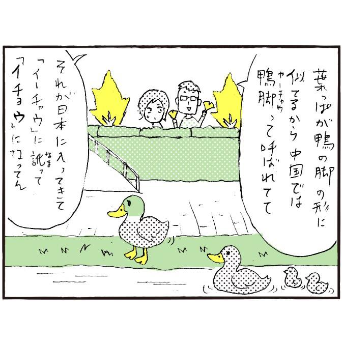 イチョウの語源-3